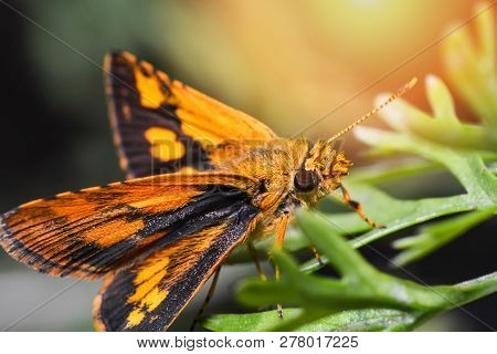Orange Butterfly On Plant - Insects Butterfly On Green Plant / Close Up Orange Butterfly In The Gard