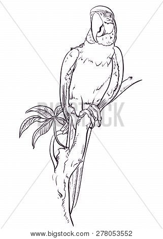 Parrot Macaw Sits On The Branch. Coloring Pages. Bird