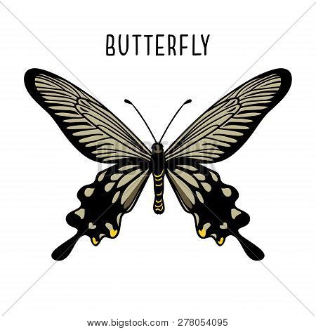 Monochrome Black Butterfly. Graphic Icon Of Butterfly. Black Silhouette Of Butterfly. Butterfly Isol