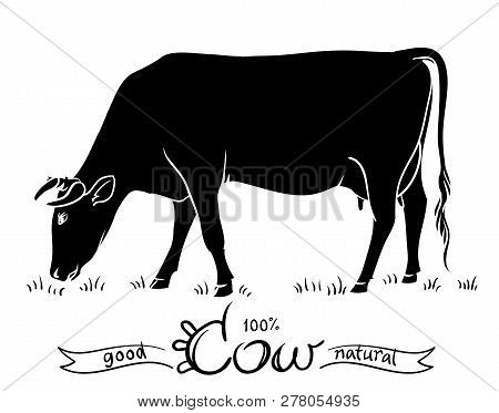 Cow Isolated. Black And White Silhouettes Of A Cow