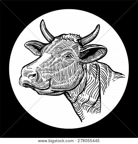 Cows Head. Hand Drawn In A Graphic Style. Isolated On White Background