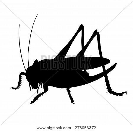 Silhouette Of Grasshopper. Hand Drawn Style Design Illustrations