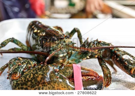 Fresh lobster at fisheries wholesale market in Seoul poster