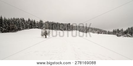 Winter Scenery With Meadow,snow,  Isolaled Tree, Forest And Few Isolated Houses Near Visalaje In Mor