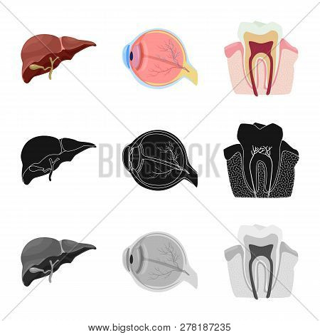 Vector Illustration Of Body And Human Logo. Set Of Body And Medical Stock Vector Illustration.
