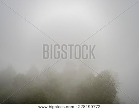 Trees In A Very Thick Fog. Silhouettes Of Trees Are Poorly Visible Due To Fog