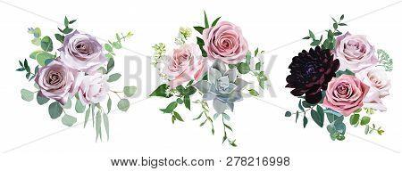 Dusty Pink And Mauve Antique Rose, Pale Flowers Vector Design Wedding Bouquets. Eucalyptus, Dark Bur
