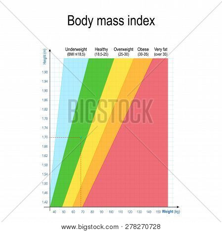 Body Mass Index Bmi Vector Photo Free Trial Bigstock