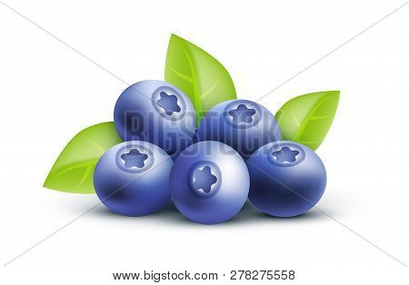 Vector Blueberry Icon Illustration Isolated On White Background. - Nature Realistic Illustration Of