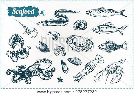 Seafood Vector Sketches Set. Hand Drawn Doodles Of Sea Fish, Octopus, Shrimp, Lobster And Eel Isolat