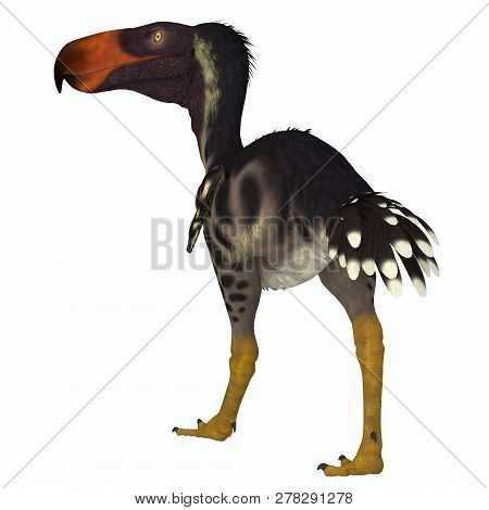 Kelenken Bird 3d Illustration - Kelenken Was A Carnivorous Terror Bird That Lived In Argentina Durin