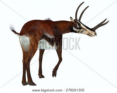 Kyptoceras Mammal 3d Illustration - Kyptoceras Was An Antelope Mammal That Lived On The Plains Of No