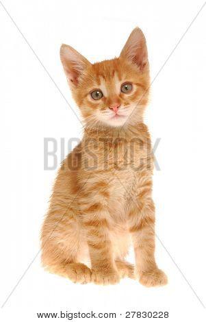 Kitty look