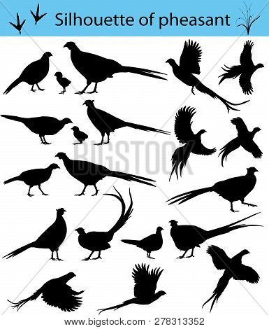 Collection Of Silhouettes Of Common Pheasants Vector Illustration