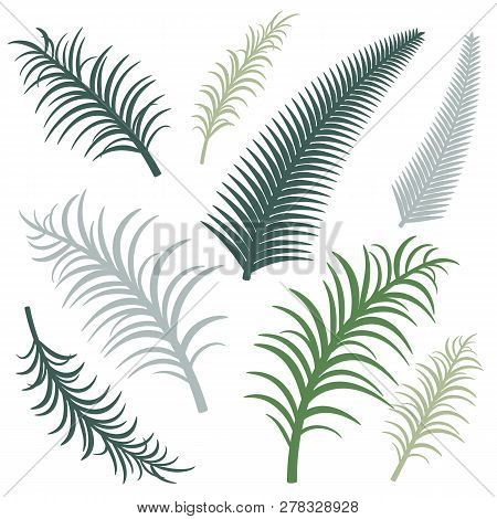 Different Versions Of Palm Branches. Vector Image. Eps 10