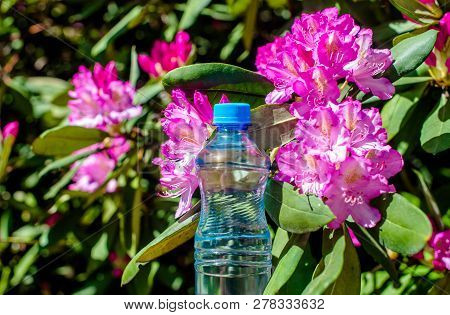 A Bottle Of Drinking Water Stands Against The Background Of A Violet Rhododendron