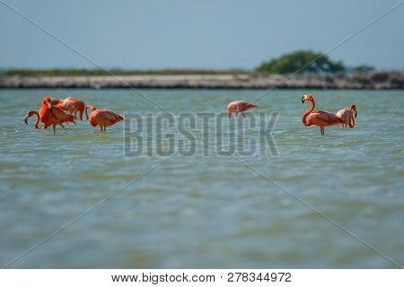 Group Of Pink Flamingos In Las Coloradas In Mexico, Famous Birdwatching Spot In Yucatan Peninsula In
