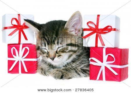 Kitten & holiday