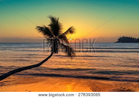 Coco Palm At Sunset Over Tropical Beach In Caribbean Sea. Vintage Processed. Fashion Travel And Trop