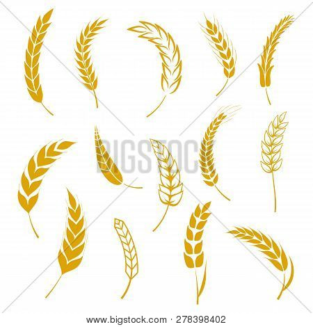 poster of Set of simple wheats ears icons and grain design elements for beer, organic wheats local farm fresh food, bakery themed wheat design, grain, beer elements, wheat simple. Vector illustration