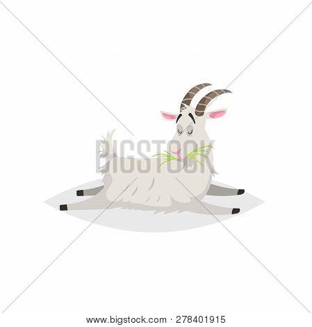 Cute Funny Goat. Cartoon Flat Style Trendy Design Farm Domestic Animal. Lies And Chews Fresh Grass.
