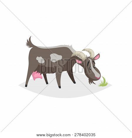 Cute Funny Goat. Cartoon Flat Style Trendy Design Farm Domestic Animal. Spotty Black Goat Stand And