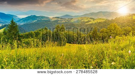 Panorama Of A Beautiful Grassy Meadow In Mountains At Sunset In Evening Light. Spruce Forest On A Hi