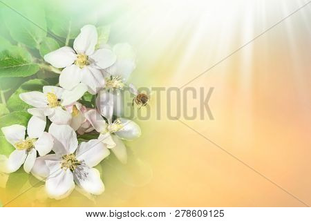 Bee With Flower On Green Spring Background. Space For Text