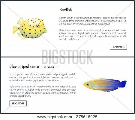 Blue Striped Tamarin And Boxfish Aquatic Habitants Isolated Vector Illustration With Text Sample And