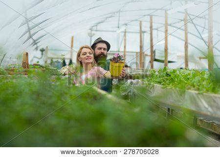 Floristics. Happy Couple Loves Floristics. Floristics Greenhouse. Man And Woman Has Floristics Busin