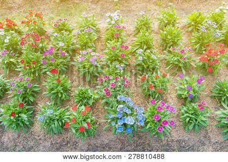 Amazing International Flower Festival In Park At Khon Kaen,thailand.