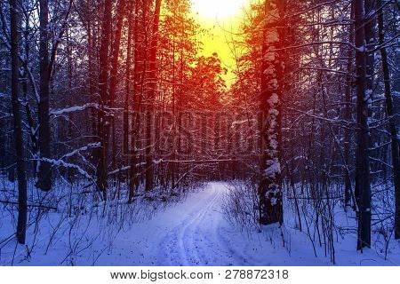 Ski Run In The Winter Sunny Forest. Winter Snow Forest Trees Sunset Background. Red Sunset In Winter