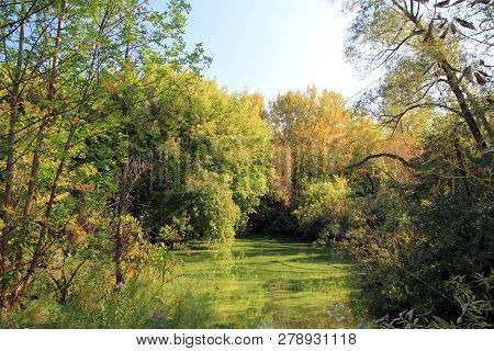 The Overgrown Pond In The Autumn Forest