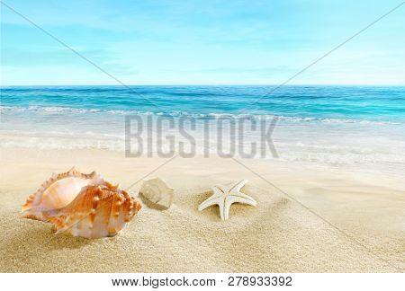 Sea ??shells on the beach. Splashing waves on the seashore.