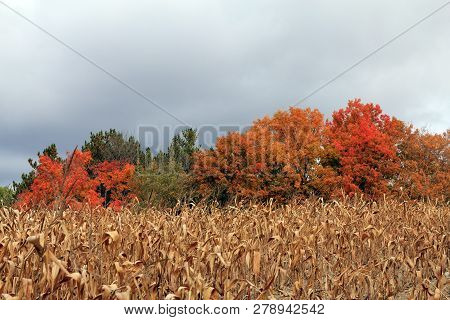 The Fall Landscape With Forest And Field