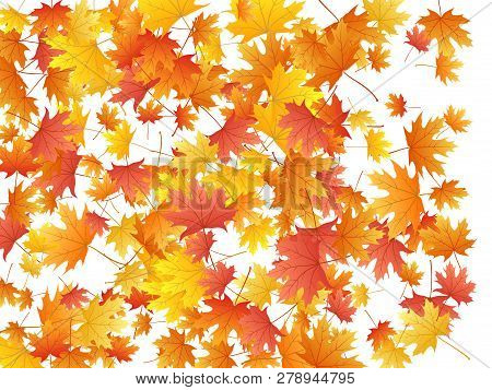 Maple Leaves Vector Background, Autumn Foliage On White Illustration. Canadian Symbol Maple Red Oran