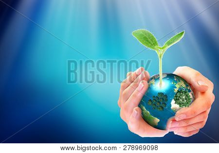 Hands Adult Business Team Work Cupping Young Plant And Seeding Nurture Grow Environmental And Reduce