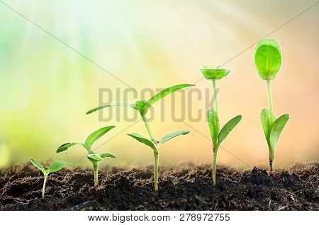Agriculture Plant Seeding Growing Step Concept In Garden And Sunlight, Space For Text
