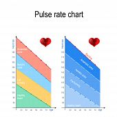 Pulse rate chart for healthy lifestyle. Maximum heart rate. Healthy heart, weight management, aerobic and anaerobic zone. maximum heart rate by age. Vector illustration for education, science and medical use poster
