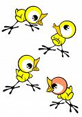 Little chicky chick with four different expression poster