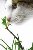 young cat smelling small tree in grass poster