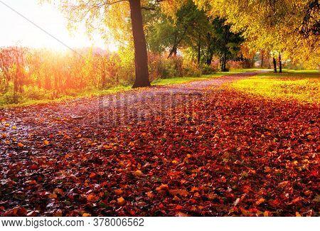 Autumn landscape. Autumn trees along the autumn alley in sunny autumn evening. Colorful autumn landscape, autumn sunny scene, autumn nature background. Autumn nature in October