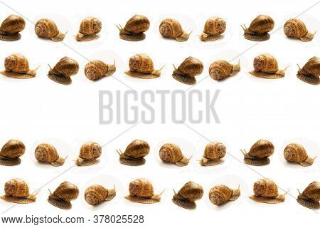 Geometric Seamless Pattern From Different Grape Snails On A White Background