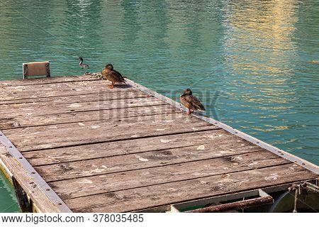 Lake Garda, View Of The Ducks On The Pier
