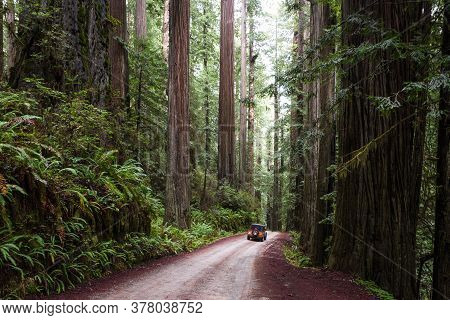 Driving  Thru A Giant Redwood Grove In A Secluded Forest Just A Few Miles Inland From The Southern O