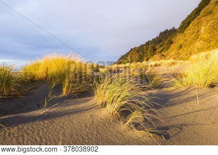 Golden Grasses On The Coast