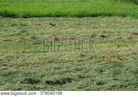 Summer Green Field Of Freshly Cut Grass
