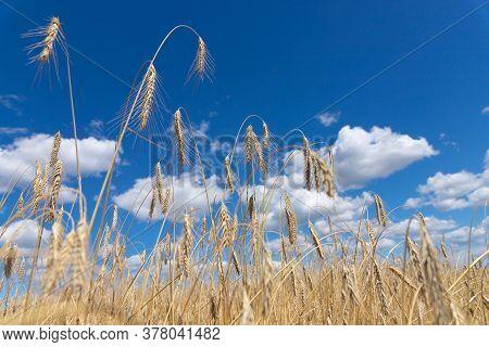 World Hunger, Food Shortage, Crisis, Drought Concept.