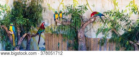 Beautiful Parrots On The Branch Of The Tree In The Nature Habitat. Green Habitat