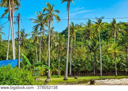 Big Tree With Branches And Land With Herbs, Big Trees In Nature, Scenic View Of Very Big And Tall Tr